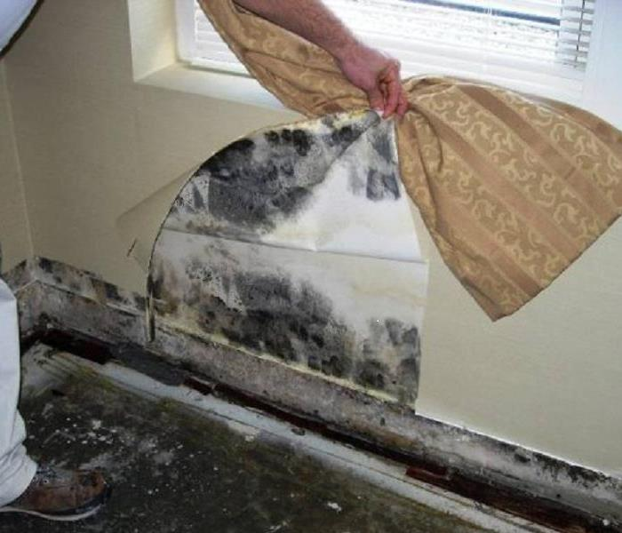 Mold under the wallpaper