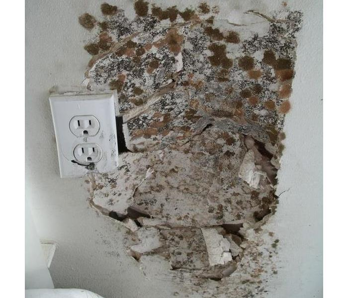 Mold Near Electrical Socket